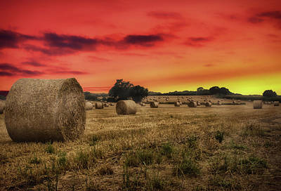 Bale Photograph - Hay Bales by Martin Newman