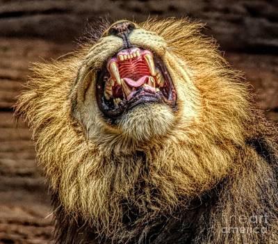 Photograph - Hear Me Roar by Paulette Thomas