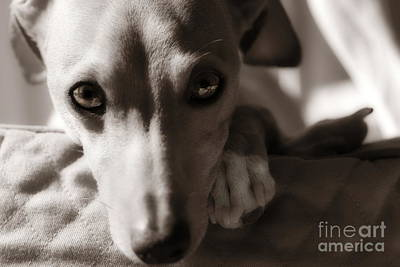 Rescued Greyhound Photograph - Heart You by Angela Rath