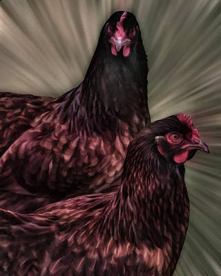 Photograph - 2 Hens by Philip A Swiderski Jr