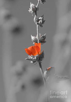 Photograph - Hidden Orange by Jessica Boone