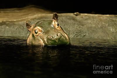 Photograph - Hippo by Joerg Lingnau