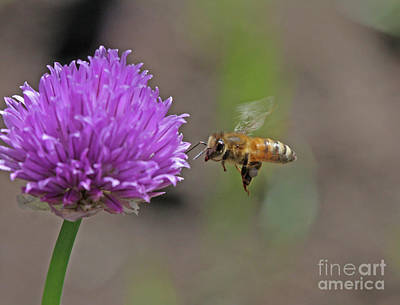 Flower Photograph - Honey Bee by Gary Wing