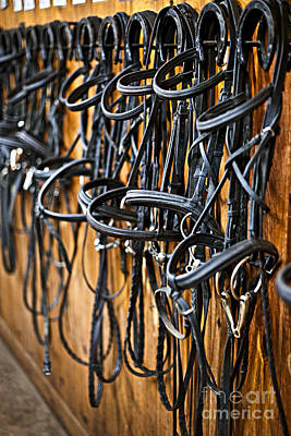 Stables Photograph - Horse Bridles Hanging In Stable by Elena Elisseeva