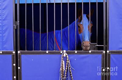 Photograph - Horse In Stall by Jim Corwin