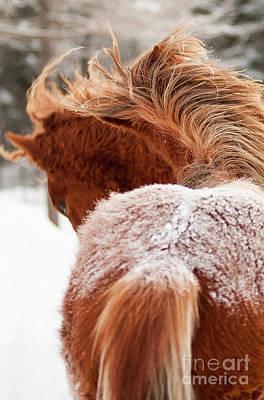 2 Horses Art Print by Eric Chamberland