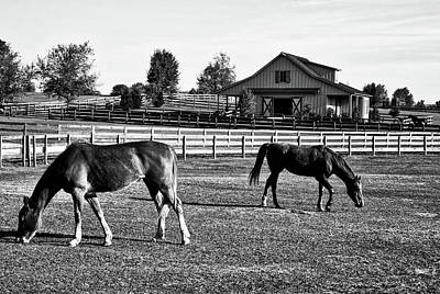 Photograph - Horses In Alabama by L O C