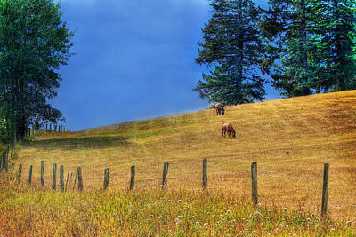 Horse Fence Photograph - Horses On The Hill by Naman Imagery