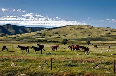 Laramie Photograph - Horses On The Laramie Plain by Mountain Dreams