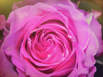 Photograph - Hot Pink by JAMART Photography