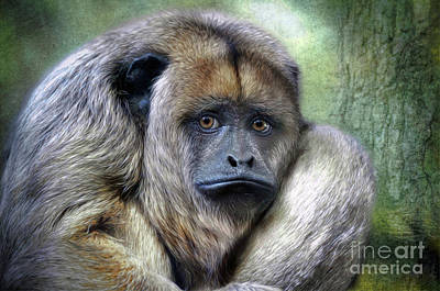 Photograph - Howler Monkey by Savannah Gibbs