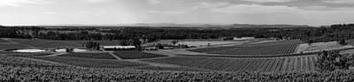 Pastoral Vineyard Photograph - Hunter Valley Vineyards - Australia by Thinkrorbot