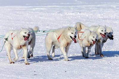 Huskies In Ilulissat, Greenland Art Print by Joana Kruse