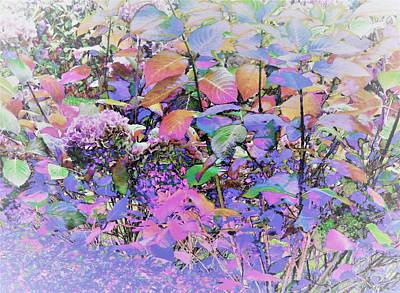 Digital Art - Hydrangea by Ann Johndro-Collins