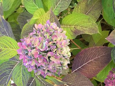 Photograph - Hydrangea by Kay Gilley