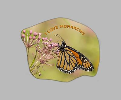 Swamp Milkweed Photograph - I Love Monarchs by Thomas Young