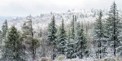 Photograph - Iced Trees Highland Scenic Highway by Thomas R Fletcher