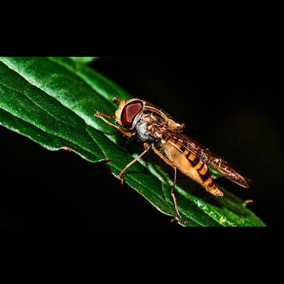 Wasp.insect Digital Art - Insects In Nature by Tommytechno Sweden
