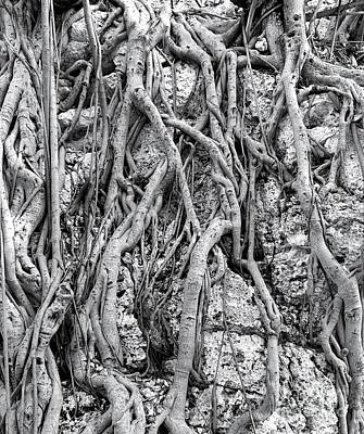 Photograph - Intricate Aerial Root System Of The Banyan Tree by Yali Shi