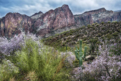 Photograph - Ironwood Blossoms In Central Arizona by Dave Dilli