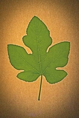 Photograph - Italian Honey Fig Leaf by Frank Wilson