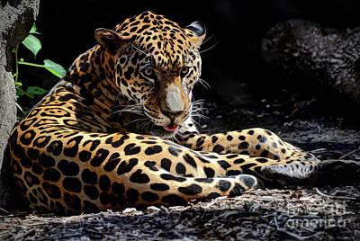 Photograph - Jaguar by Savannah Gibbs