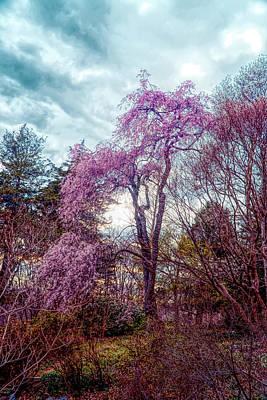 Photograph - Japanese Garden by Lilia D