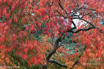 Japanese  Maple Tree Original by Tracy  Hall