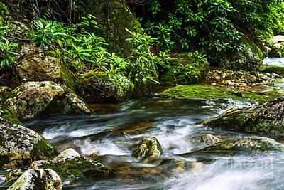 Kens Creek Cranberry Wilderness Print by Thomas R Fletcher