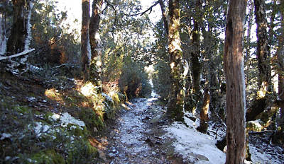 King Billy Forest Cradle Mountain Art Print by Sarah King