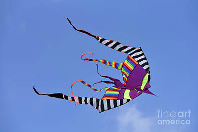 Photograph - Kite Flying During Kite Festival  by George Atsametakis