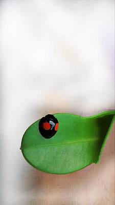 Photograph - Ladybug by Paul Wilford