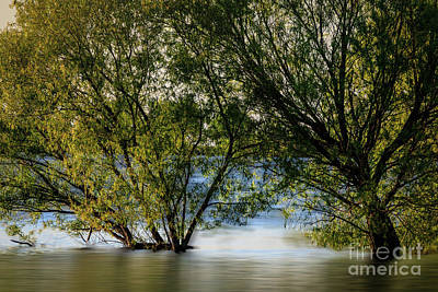 Photograph - Lake Henfer Shoreline by Richard Smith