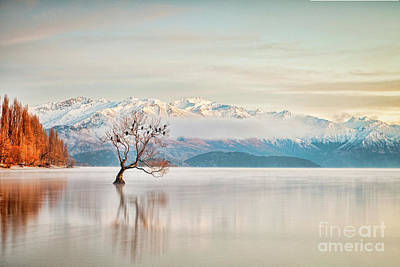 Photograph - Lake Wanaka Otago New Zealand by Colin and Linda McKie