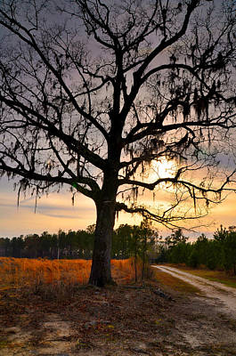 Photograph - Late In The Day by Linda Brown