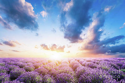 Photograph - Lavender Flower Field At Sunset by Michal Bednarek