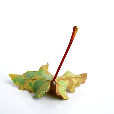 Leaf Art Print by Bernard Jaubert