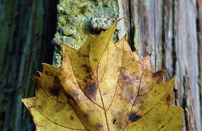 Photograph - Leaf by Larah McElroy