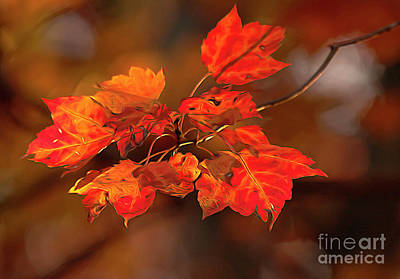 Photograph - Leaves by Darren Fisher