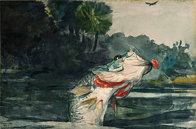 Winslow Homer Drawing - Life-size Black Bass by Winslow Homer