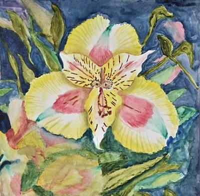 Lily Original