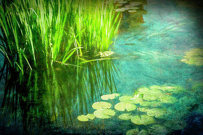 Painting - Lily Pads by Ann Powell