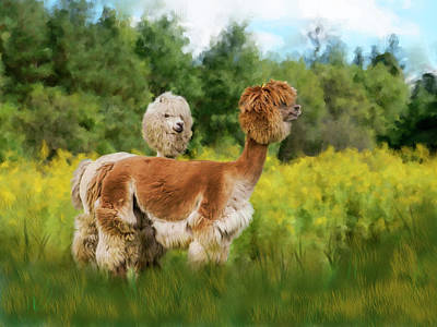Llama Digital Art - 2 Little Llamas by Mary Timman