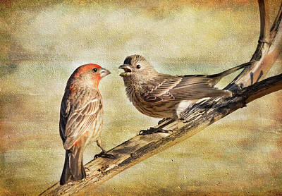 Photograph - 2 Little Love Birds by Barbara Manis