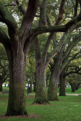 Charleston Photograph - Live Oaks by Jill Lang