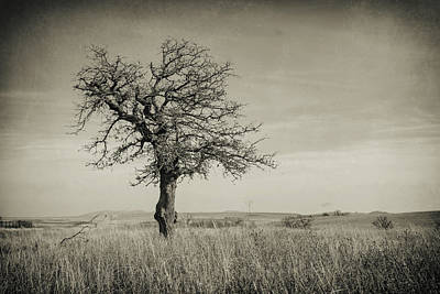 Photograph - Lone Tree by Ricky Barnard