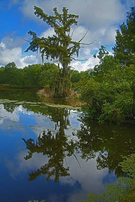 Photograph - Louisiana  Bald Cypress Tree by Ronald Olivier