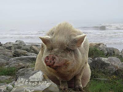 Love Not Hate Pig Art Print