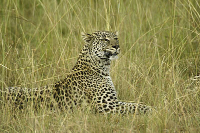 Lovely Leopard Art Print by Michele Burgess