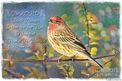 Photograph - Male Housefinch With Verse by Debbie Portwood